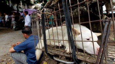 Dogs are transported from across China to Yulin, where they are slaughtered for the Dog Meat Festival.