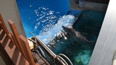 A dolphin pool at Dolphin Marine Magic.