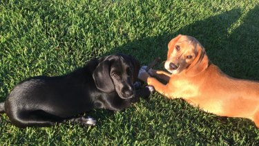 Mila, left, and Sunny would regularly play in the park.