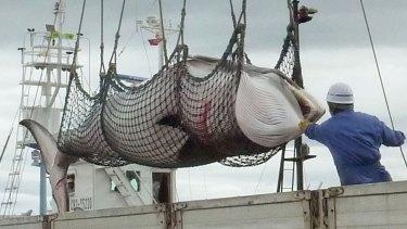 A minke whale is unloaded in Kushiro, a port on Japan's northern island of Hokkaido, in 2013.