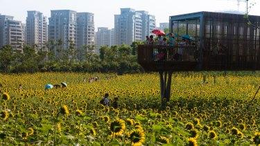 A viewing platform in Kongjian Yu's transformed Quzhou landscape.