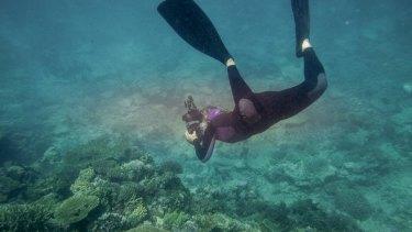 Coral off Heron Island.