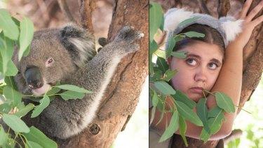 Peel Zoo's Britt as a koala.