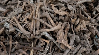 The bones of 99 dogs were found in the mass grave.
