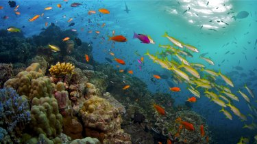 Google has sent its Street View to the Great Barrier Reef to mark World Oceans Day