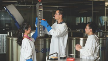 NSW Health Statewide Biobank staff inspecting the cryogenic vats that store samples at -196 degrees.