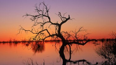 Reflections in Lake Menindee at sunset, Kinchega National Park,NSW .