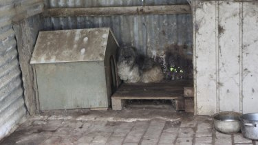 Scenes of horror: More than 175 dogs were removed from the Adelaide Hills puppy factory by the RSPCA.