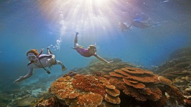 A major government assessment of the reef last year declared climate change its most serious threat.
