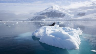 Antarctic ice is melting at a faster rate.