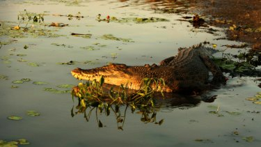 A woman has been attacked by a crocodile in Western Australia's north west.