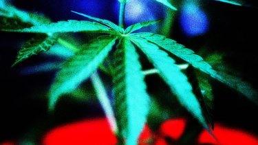 On trial: Medical marijuana