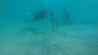 Scientists working on the reef.