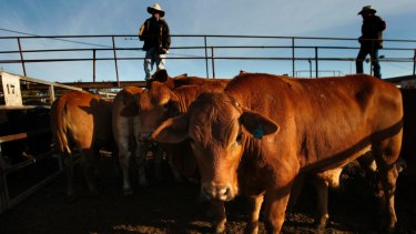 "Wellard said cattle prices in Australia remained ""uneconomically high"" as farmers held stock and grew their herds."