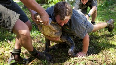 'You'll be snapped in half': Australian Reptile Park staff secure the extremely protective female alligators before harvesting eggs from their nests.