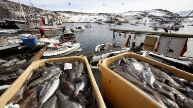 Containers of freshly caught fish sit on the dock in the fishing harbour of Ilulissat in western Greenland.