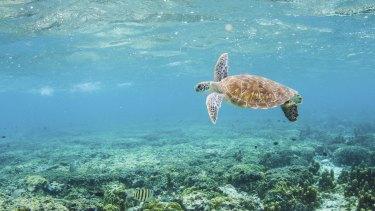 Explore the aquatic world with David Attenborough's Virtual Reality.