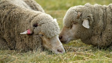 """Australia once """"rode on the sheep's back"""", but since 1971, there's been a trade deficit."""