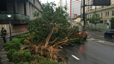 Violent storm lashes Brisbane, Thursday November 27. A tree uprooted near Turbot Street.