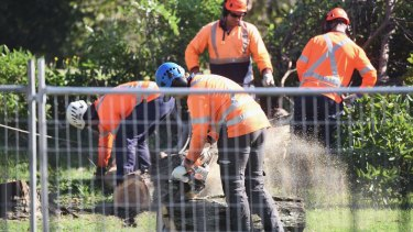 Contractors chainsaw trees on the edge of Sydney's Centennial Park on Friday morning.