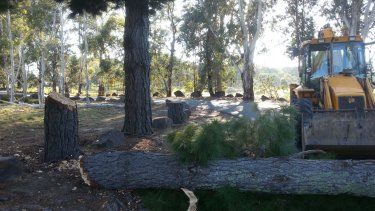 One of the trees chopped down by vandals at Pine Island recreation reserve.