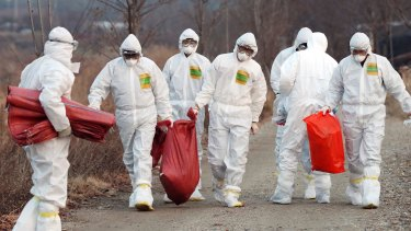 Health officials carry a sack containing killed chickens after a suspected case of bird flu in Incheon, South Korea, last year.