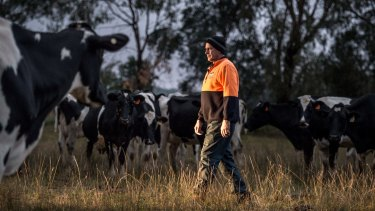 Rod Newton checking the cows that are due to calve soon, on his Whorouly dairy farm in the Ovens Valley.