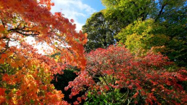 Autumn colours in Mount Macedon.