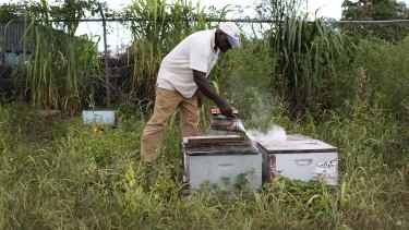 Beekeeper Steve Corniffe with his honeybees in Florida on Tuesday.