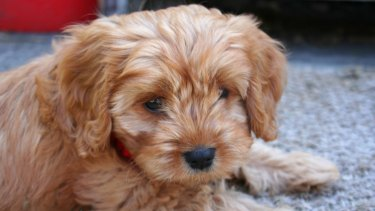 Puppies represent new life in its all its forward-bounding, slobbering messiness.