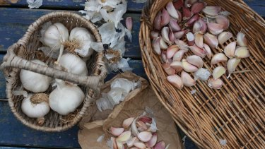 Garlic keeps well, so is a good choice for a farmers who want a crop to sell.