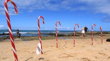 A walk among the candy canes on Shelly Beach, Cronulla, Sydney.