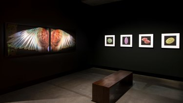 Various works curated by Brian Boyd, as a part of <i>On the Origin of Art</i>, including <i>Kereru Wings, Waiheke</i> (2010) by Fiona Pardington.