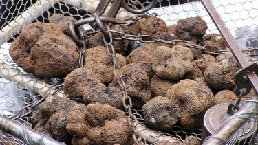 Truffles on sale at the renowned black truffle market in Lalbenque, France.