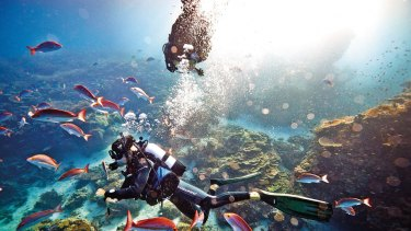 The waters around Heron Island teem with fish.
