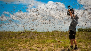 Cameraman Rob Drewett films in the middle of a swarm of a billion flying locusts in south-west Madagascar while making <i>Planet Earth II</i>.