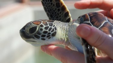 Holding turtles attractions should also not be promoted, the report says.