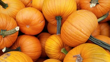 Potimarron pumpkins, a French heirloom variety with a flavour reminiscent of chestnuts.