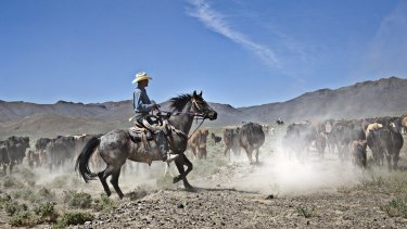 Max Filippini herds cattle into a grazing area that was once off-limits because of drought restrictions, in Battle Mountain, Nevada, in June.