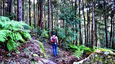 Experience the largest remaining blue gum forest in Sydney on Blue Gum Walk.