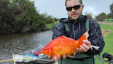 Stephen Beatty with a large Goldfish