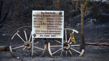 The fire tore through the kennels and cattery on Saturday, killing dozens of family pets.