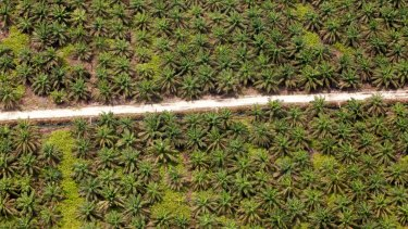 An aerial view of a road crossing through palm plantations, inside APRIL's concession in Riau province.