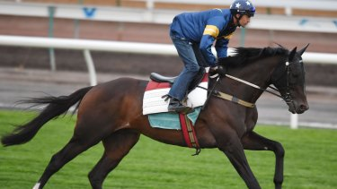 Dwayne Dunn riding Araldo during a trackwork session on the course proper at Flemington Racecourse on October 28.