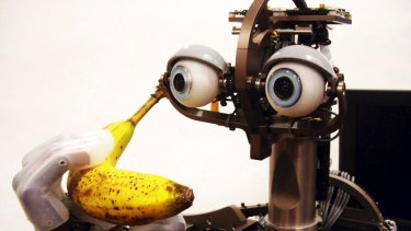 Peeling a banana is easy for a human, but a tough challenge for a robot, like this one from MIT's computer science laboratory.