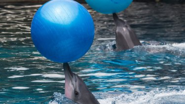 Many countries are phasing out the keeping of dolphins in captivity.
