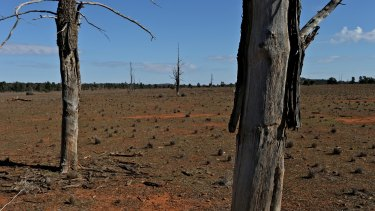 The federal government has spent more than $1 billion paying farmers not to clear or to regrow forests.