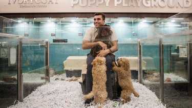 John Grima's proposal to develop a dog breeding facility to supply poodle crossbreeds to his Kellyville Pets shop has provoked opposition from residents and animal welfare campaigners.