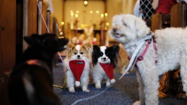 Fur the love of God: All creatures were welcome at the Christmas Day service at the St James the Great church in St Kilda.