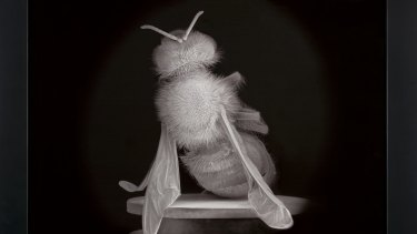 Dead Bee Portrait #2 by Anne Noble.